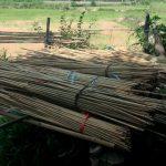 suszenie bambusa
